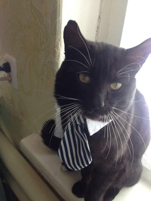 «Не прогоняй кота, он сам нас выбрал!» — просил муж. Мурзик со сломанным хвостом лежал под чужими дверями…