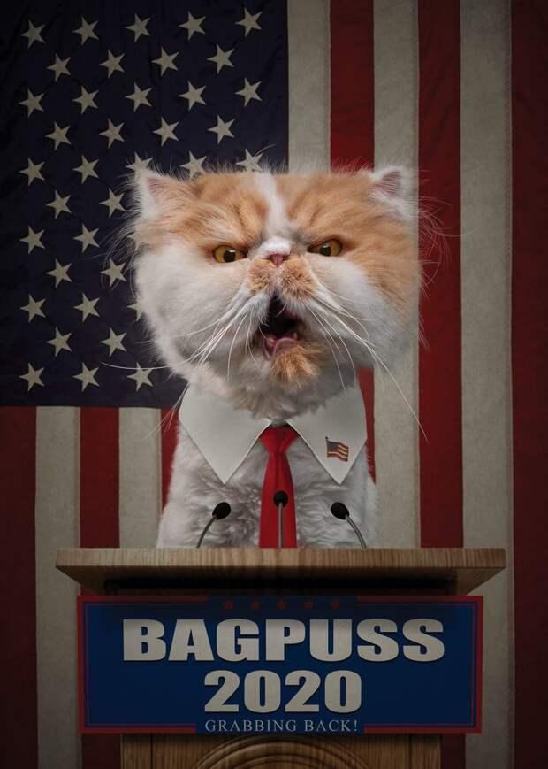 6. Бэгпусс - наш кандидат. Кошачья хватка никуда не делась! Забавные фото, анималист, домашние животные, очеловечивание, портреты животных, собака, собаки, фото собак