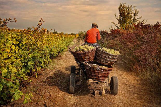 «Почему мы должны страдать?»: грузинские фермеры негодуют