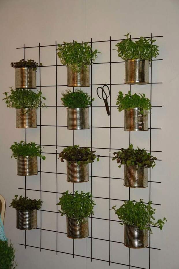 Можно выращивать различные травы, которые затем добавлять в еду и напитки. зеленый, лестницы, полки, растения, этажерки