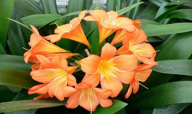 Чудо-стимулятор роста для цветов