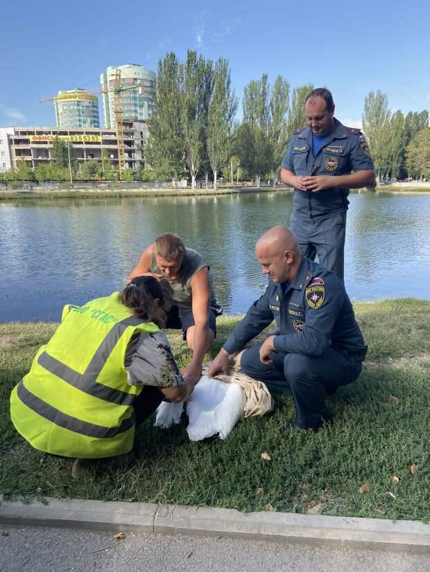 В Симферополе из Гагаринского парка сбежал лебедь