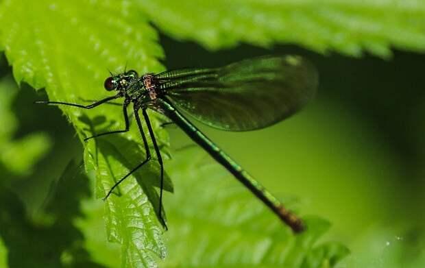 Экологи в «Парке Яуза» обнаружили редкий вид краснокнижной стрекозы