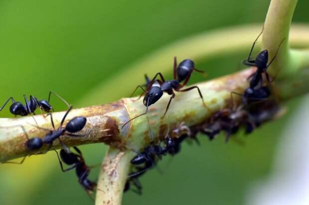 Как муравьи могут помочь нам победить пандемию