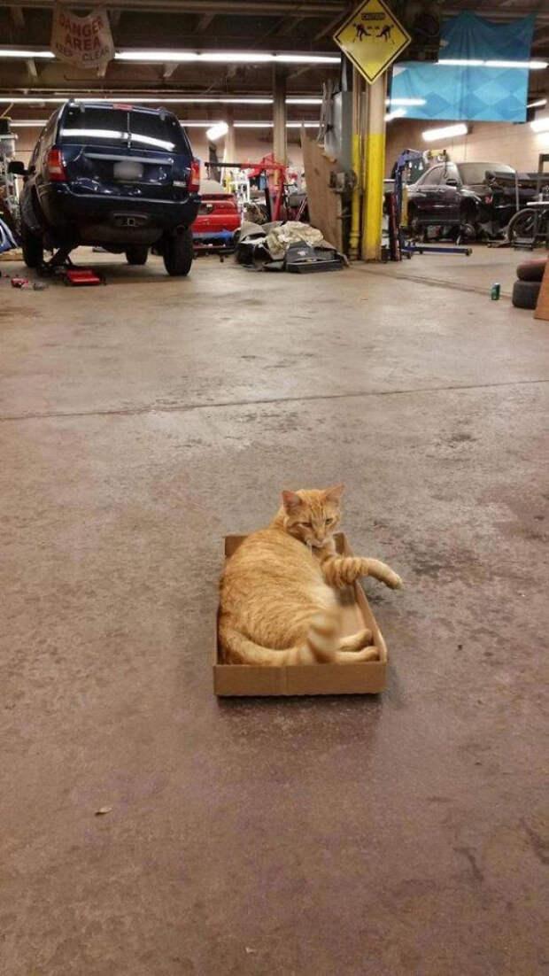 Этот кот пришел к ребятам на работу..он, кажется, хорошо проводит время встреча, гости, дружба, животные, коты, кошки, неожиданно, фото