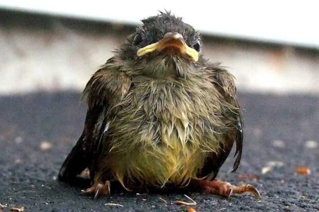 7. Нельзя трогать выпавшего из гнезда птенца - иначе мать его бросит МИФ И ПРАВДА, животные, животный мир, интересные факты, миф, познавательно, факты о животных
