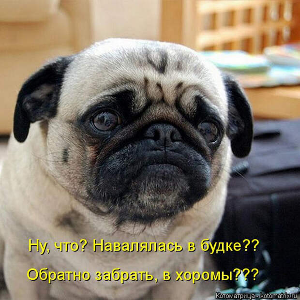 kotomatritsa_D (700x700, 425Kb)