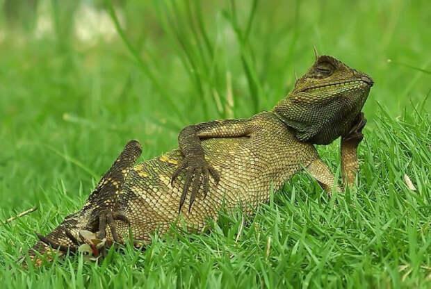 Забавные сцены из жизни рептилий в фотографиях Яна Хидаята (19 фото)