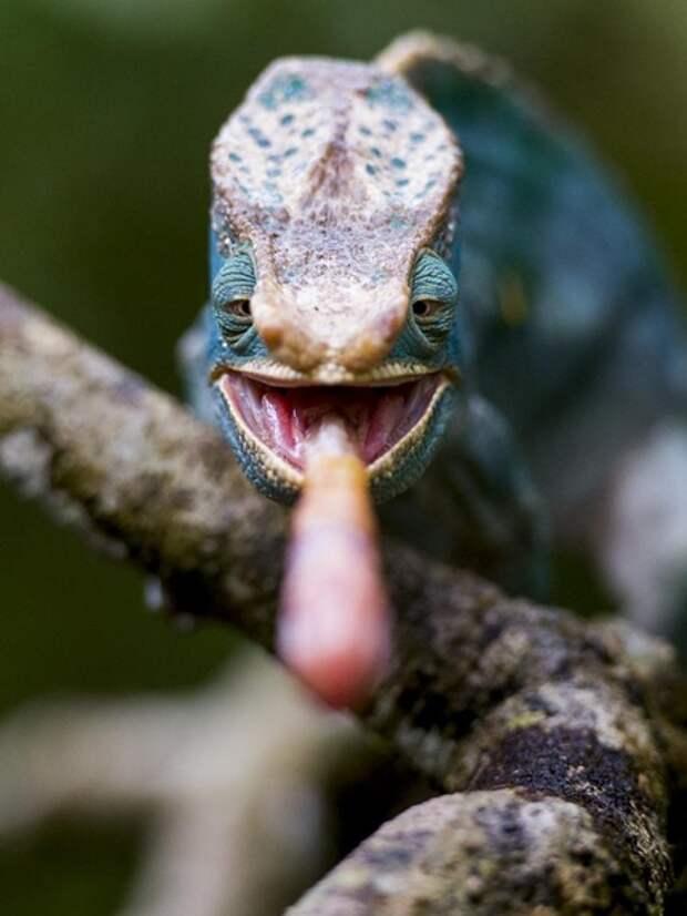 15 фотографий живой природы, которые заставят вас улыбнуться