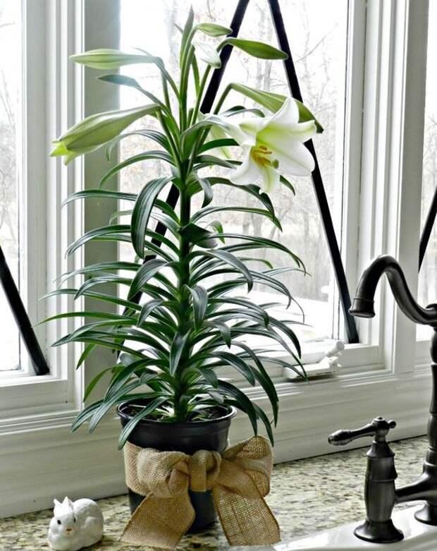 Лучшие растения для вашей ванной комнаты