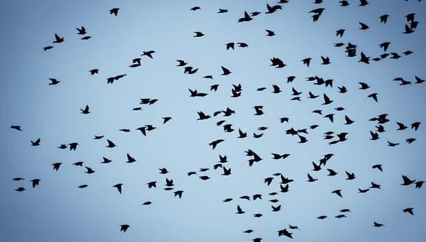 Основная масса перелетных птиц покинула Московский регион
