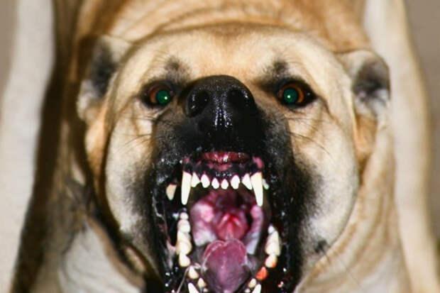 Якутские бродячие собаки решили напасть на прохожего, но он оказался каратистом