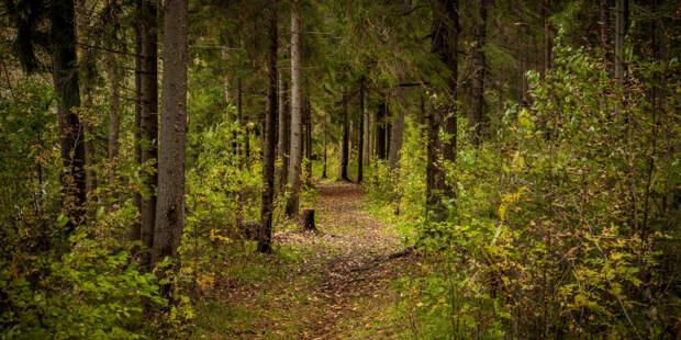 Экотропа для семейных прогулок «У Лукоморья» появится в Петербурге