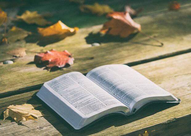 Книга/Фото: pixabay.com