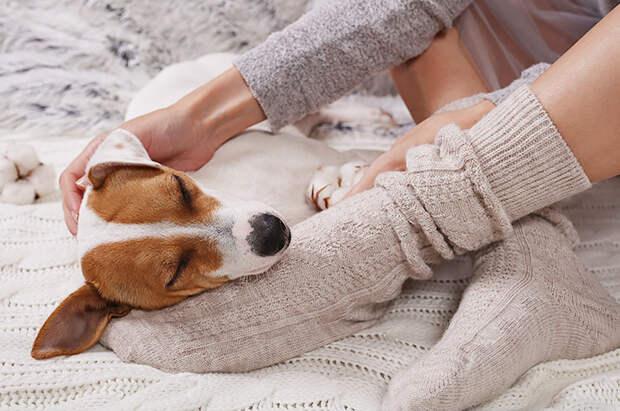 Хлопок, шерсть или пух - какие носки самые тёплые?