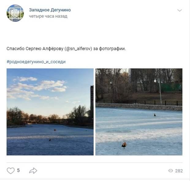 Фото дня: огари на Дегунинском пруду