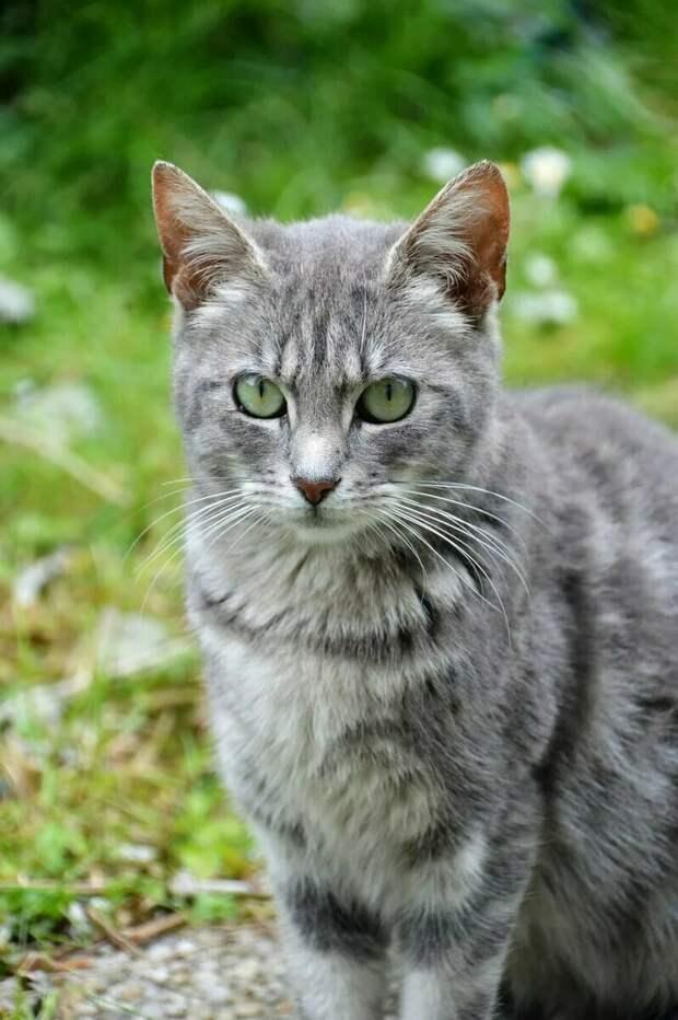 Кошку срочно прооперировали. Ясный отказался уходить. Он кружил по двору на длинном поводке...