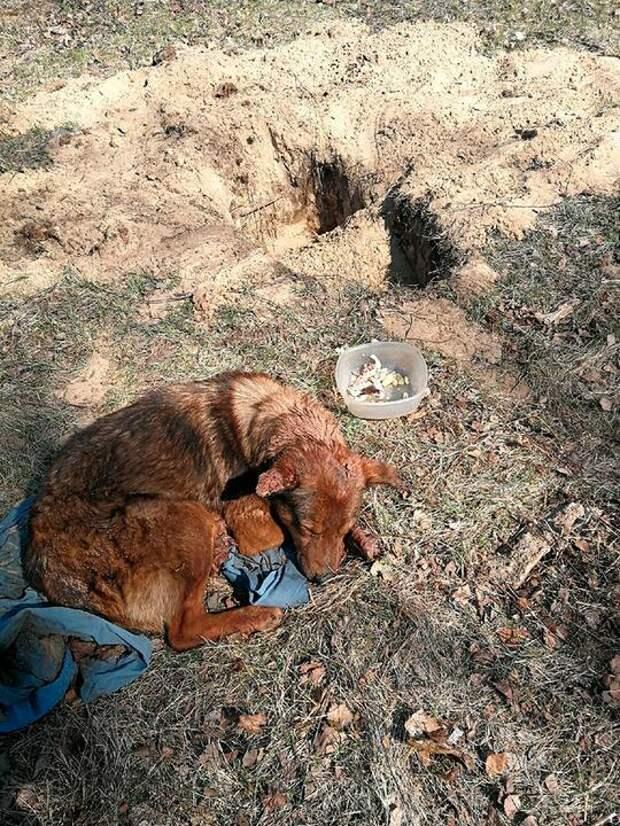 Собака пять дней провела вмогиле, ноосталась жива. Эта история всколыхнула весь Солигорск