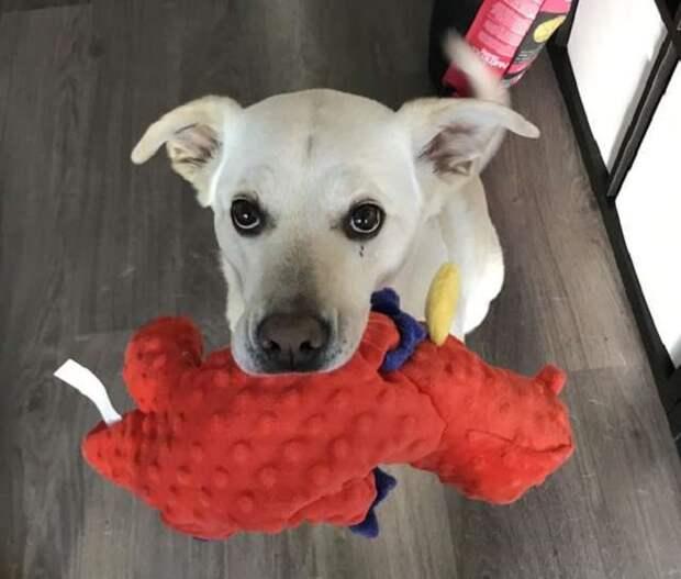 Собака и игрушка дракона
