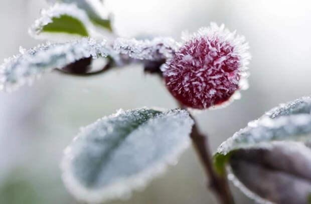 Эксперты о предстоящих заморозках: Такие температуры фиксируются в начале октября