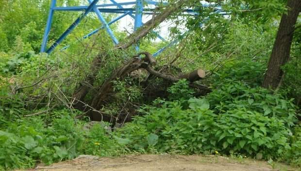 Спиленные деревья на Олимпийском проспекте Мытищ уберут до 20 июля