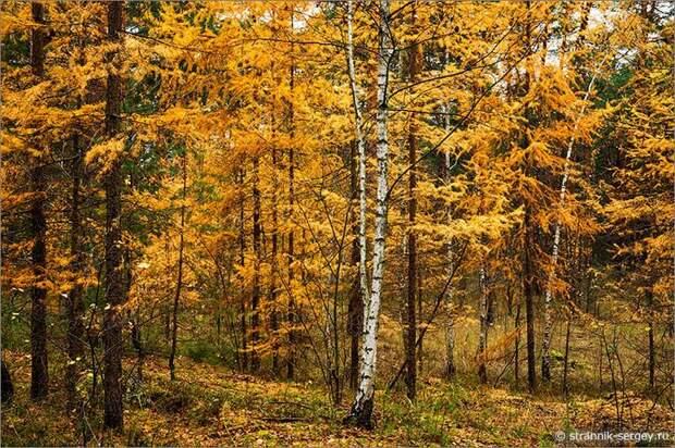 Осенний лес в Приокско-Террасном заповеднике