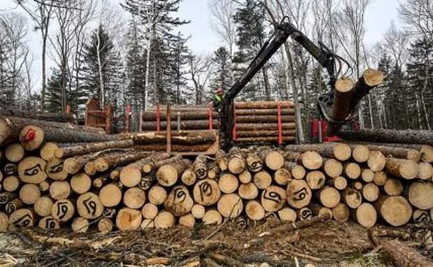 Лес в России валят - щепки летят и стон стоит
