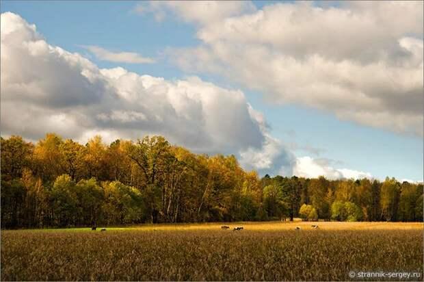 Пять чудес Подмосковья золотой осенью