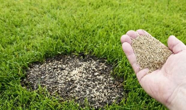 Как сеять семена травы - 4 главных совета