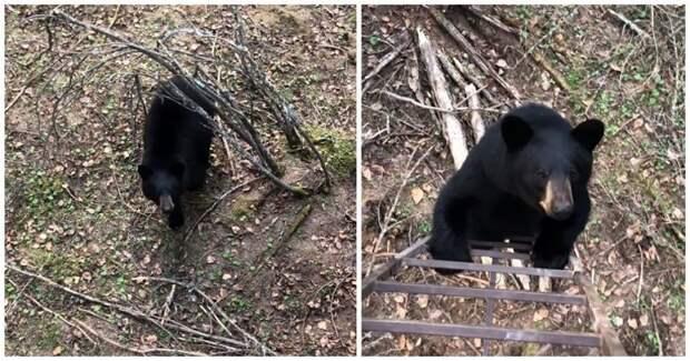 Любопытный мишка захотел поближе познакомиться с девушкой из Канады видео, животные, канада, медведь, прикол, реакция, юмор