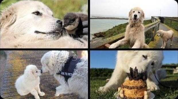 30 смешных и милых животных, с которыми не соскучишься