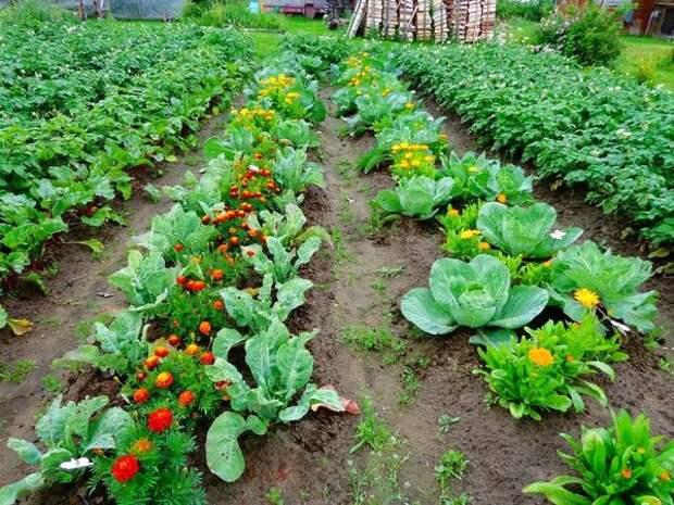 Эта нехитрая уловка поможет увеличить урожай в несколько раз