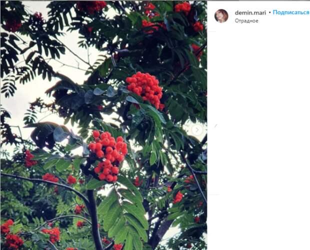 Фото дня: в Отрадном поспела рябина