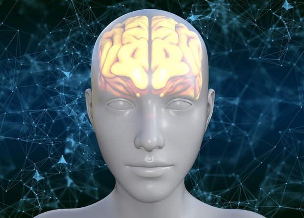 Немецкие ученые выяснили, что у самых умных - две артерии в мозге вместо одной