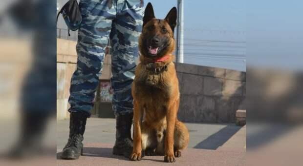 Горыныч помог поймать магазинных воров в Симферопольском районе
