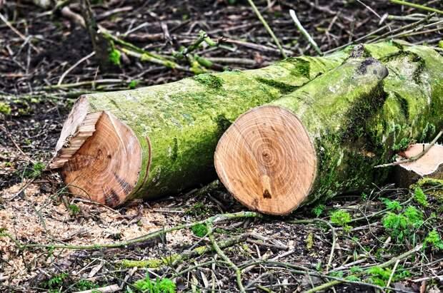 Рабочие незаконно вырубали лес при постройке водоотвода в Феодосии