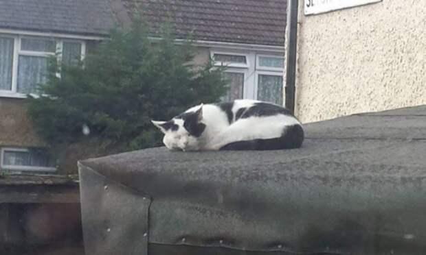 После переезда в новый дом люди обнаружили на пороге весьма наглого котика