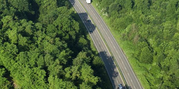 США примут участие в высаживании триллиона деревьев