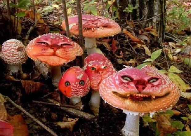 Самая большая тайна грибов
