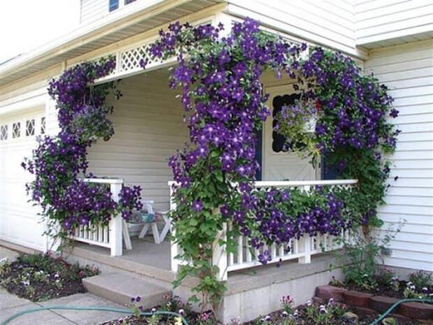 Идеальные растения для садовой беседки
