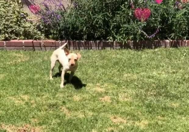 Парень вырвал бездомного пса из рук отловщиков, которые хотели его усыпить