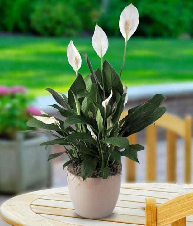 комнатные растения виды