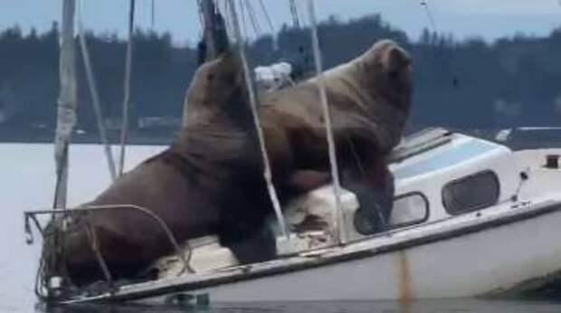 Плывя на лодке, человек увидел то, что заставило его схватить телефон! Два огромных морских льва тоже рассекали на судне…