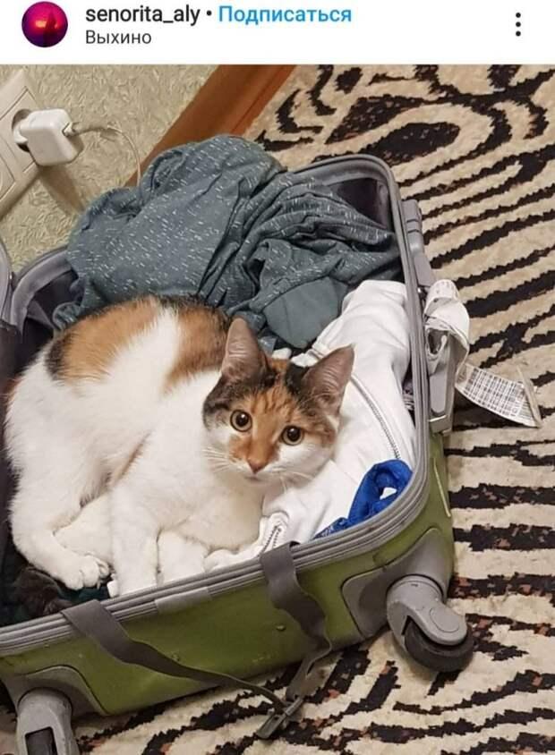 Фото дня: как в Выхине кошка собирать чемодан помогала