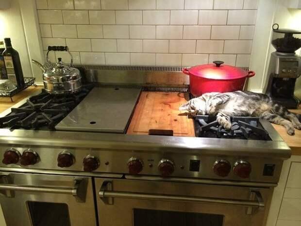 1. Взять, например, этого мастера выбирать себе теплое местечко домашний питомец, животные, коты, лежанка, милота