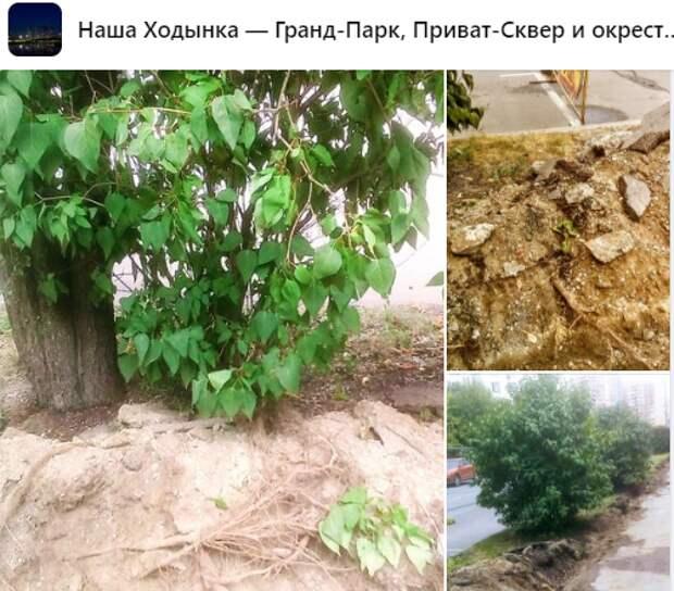 На Хорошевском шоссе повредили корни деревьев