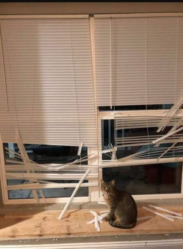 Кот испортил жалюзи