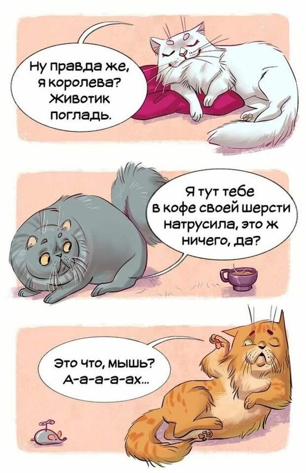 16 Забавных Комиксов О Различных Породах Кошек.