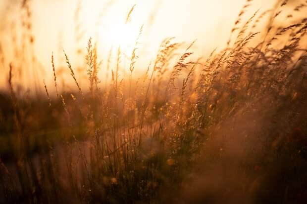 НСА: на начало июня в России агрострахованием защищены более 3 млн га посевов под урожай 2021 года