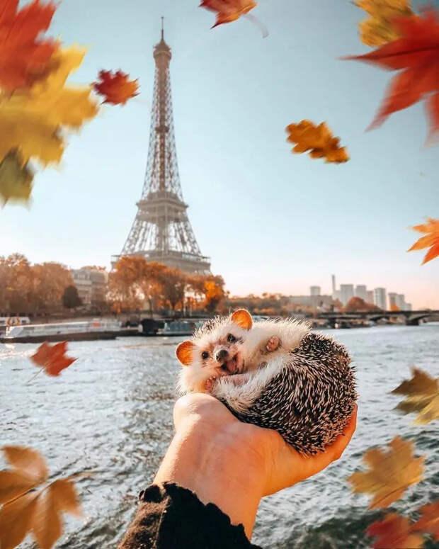 25 снимков очаровательного ежа, который путешествует помиру изавоевывает людские сердечки